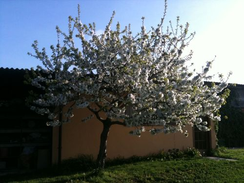 Bee_tree_01