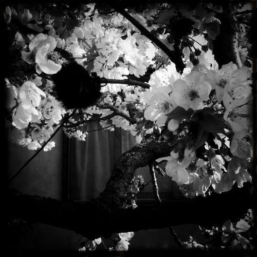 Bee_tree_02